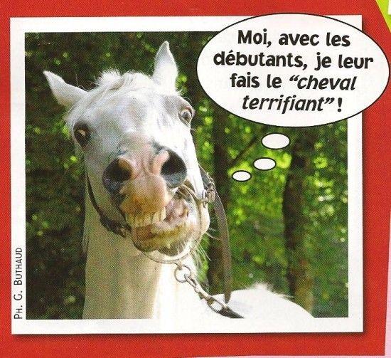 Trop marrant le cheval - Cheval rigolo ...